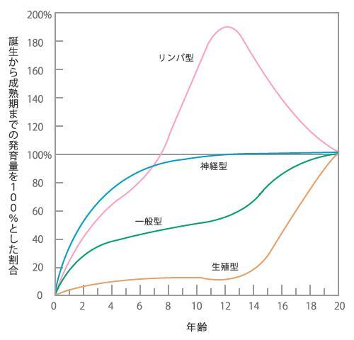 スキャモンの成長発達曲線